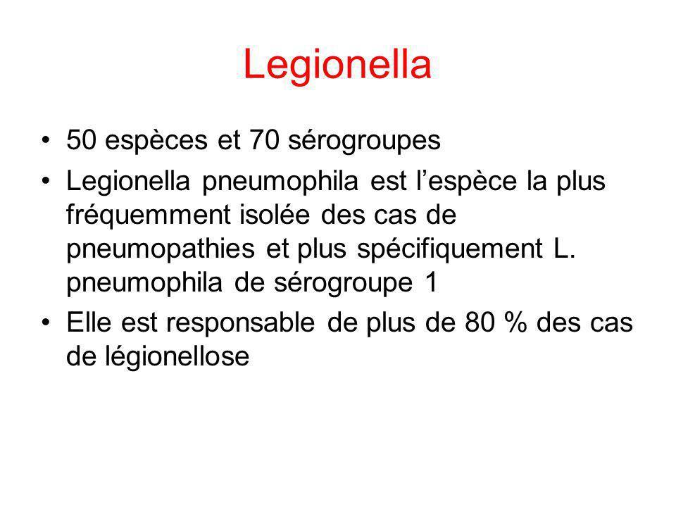 Legionella 50 espèces et 70 sérogroupes Legionella pneumophila est lespèce la plus fréquemment isolée des cas de pneumopathies et plus spécifiquement
