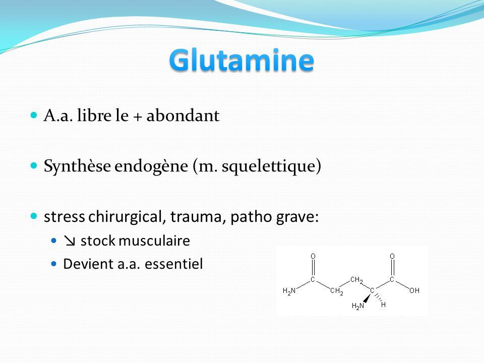 A.a. libre le + abondant Synthèse endogène (m. squelettique) stress chirurgical, trauma, patho grave: stock musculaire Devient a.a. essentiel