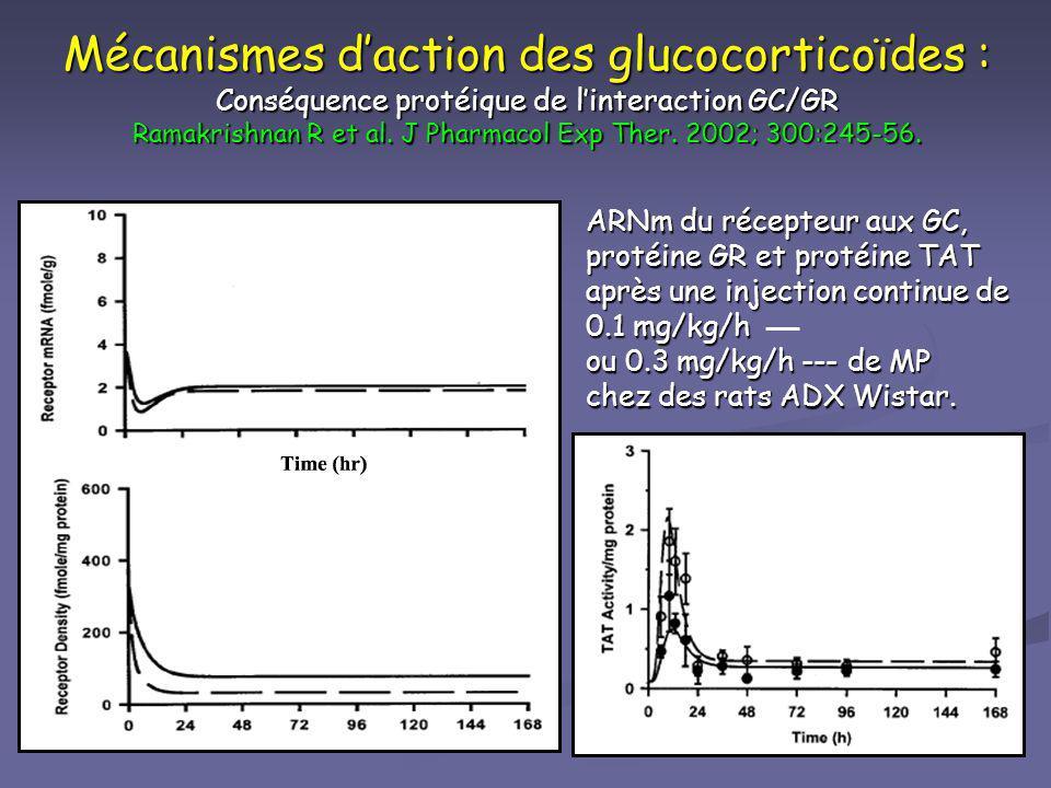 Mécanismes daction des glucocorticoïdes : Conséquence protéique de linteraction GC/GR Ramakrishnan R et al. J Pharmacol Exp Ther. 2002; 300:245-56. AR