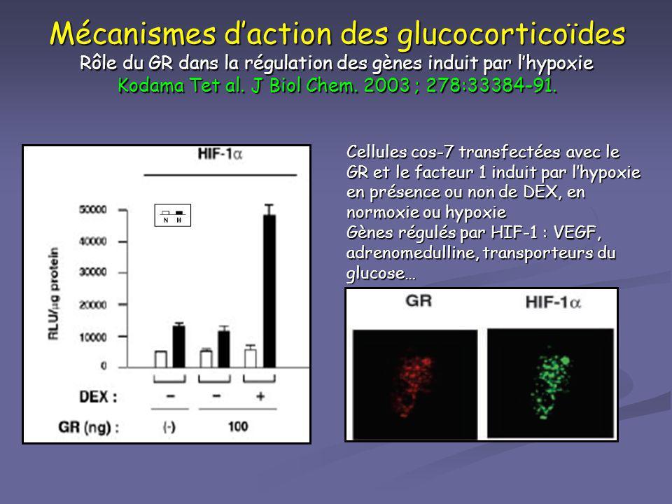 Mécanismes daction des glucocorticoïdes Rôle du GR dans la régulation des gènes induit par lhypoxie Kodama Tet al. J Biol Chem. 2003 ; 278:33384-91. C