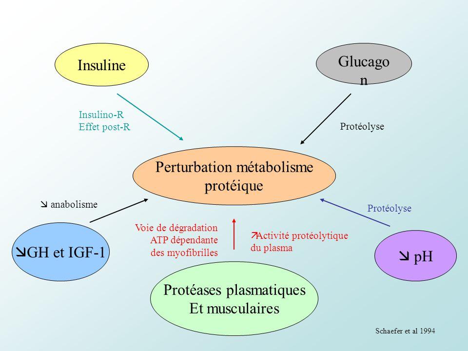 Insuline Glucago n Perturbation métabolisme protéique Protéases plasmatiques Et musculaires GH et IGF-1 pH Insulino-R Effet post-R Protéolyse anabolis