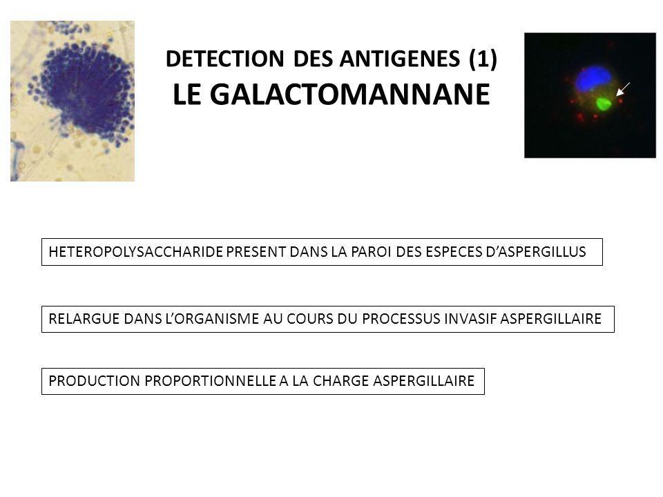 DETECTION DES ANTIGENES (1) LE GALACTOMANNANE HETEROPOLYSACCHARIDE PRESENT DANS LA PAROI DES ESPECES DASPERGILLUS RELARGUE DANS LORGANISME AU COURS DU