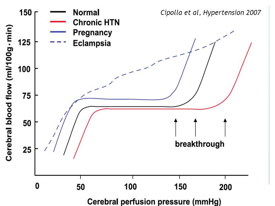 Cipolla et al, Hypertension 2007