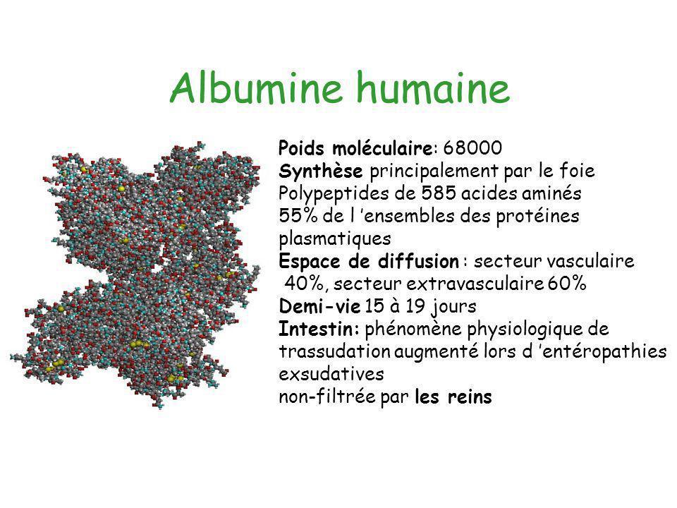 Albumine humaine Poids moléculaire: 68000 Synthèse principalement par le foie Polypeptides de 585 acides aminés 55% de l ensembles des protéines plasm