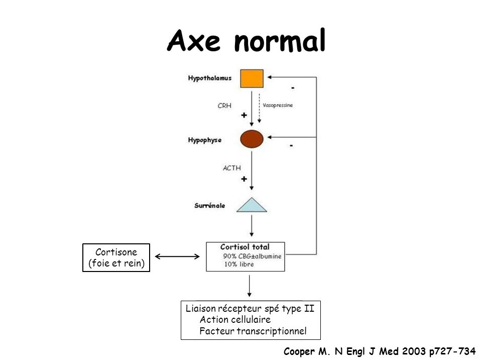 Axe normal Cortisone (foie et rein) Liaison récepteur spé type II Action cellulaire Facteur transcriptionnel Cooper M. N Engl J Med 2003 p727-734