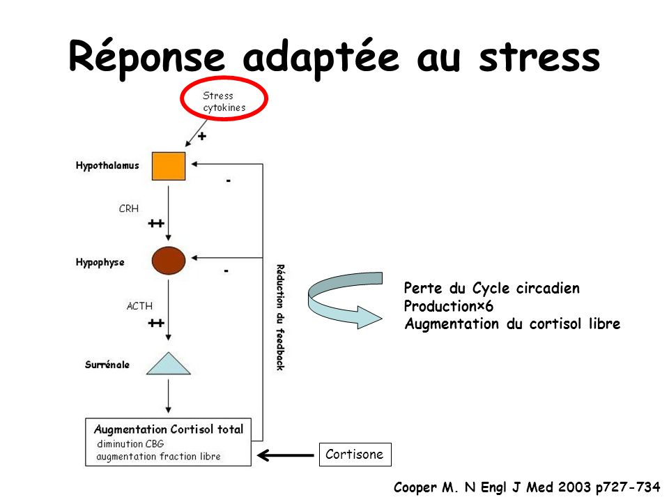 Réponse adaptée au stress Perte du Cycle circadien Production×6 Augmentation du cortisol libre Cortisone Cooper M. N Engl J Med 2003 p727-734