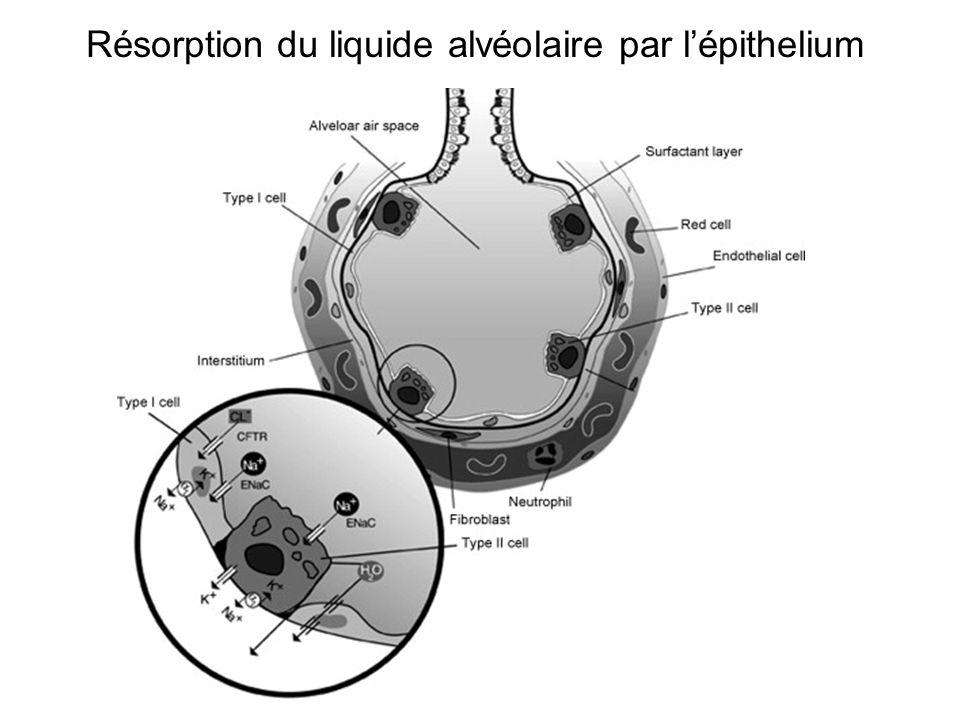 Résorption du liquide alvéolaire par lépithelium