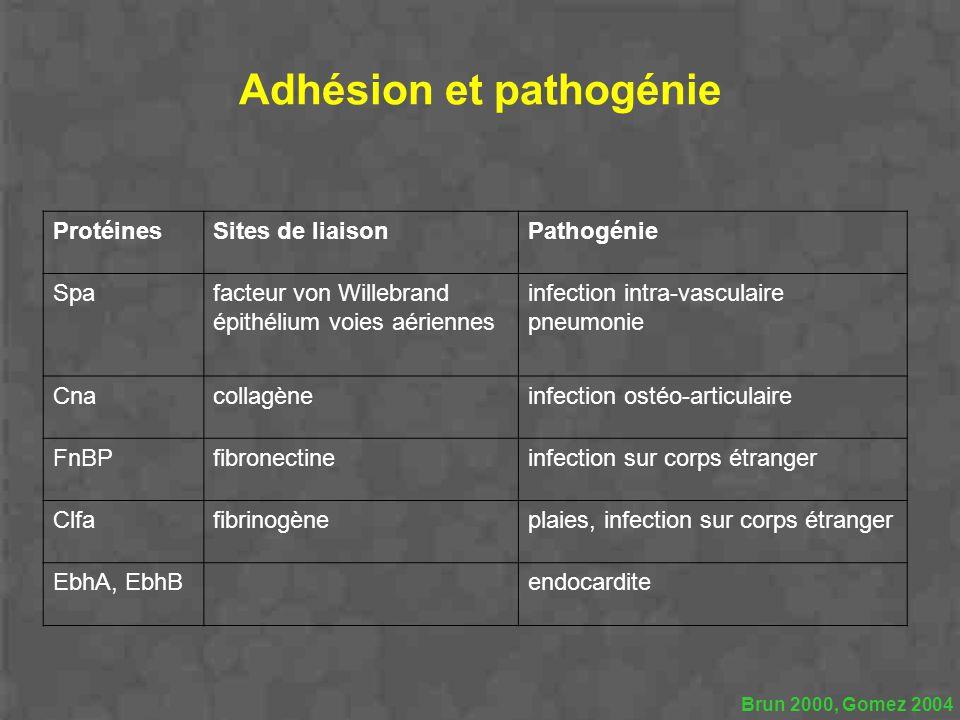 Adhésion et pathogénie ProtéinesSites de liaisonPathogénie Spafacteur von Willebrand épithélium voies aériennes infection intra-vasculaire pneumonie C