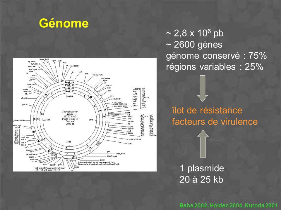 Baba 2002, Holden 2004, Kuroda 2001 ~ 2,8 x 10 6 pb ~ 2600 gènes génome conservé : 75% régions variables : 25% 1 plasmide 20 à 25 kb Génome îlot de ré