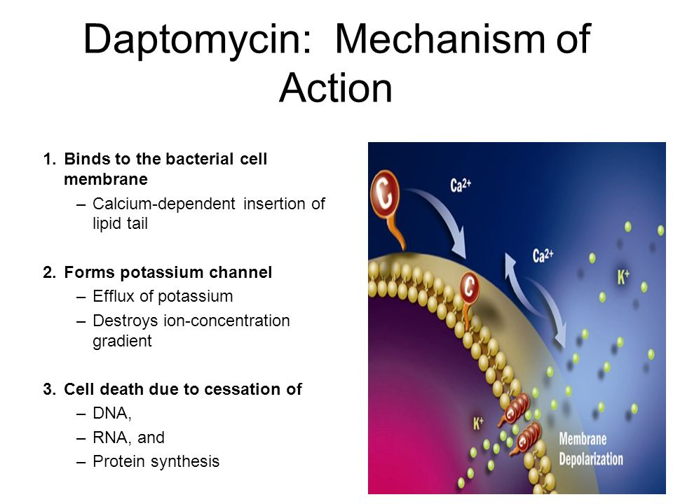 Daptomycin: Mechanism of Action 1.Binds to the bacterial cell membrane –Calcium-dependent insertion of lipid tail 2.Forms potassium channel –Efflux of