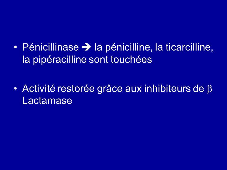 Pénicillinase la pénicilline, la ticarcilline, la pipéracilline sont touchées Activité restorée grâce aux inhibiteurs de Lactamase