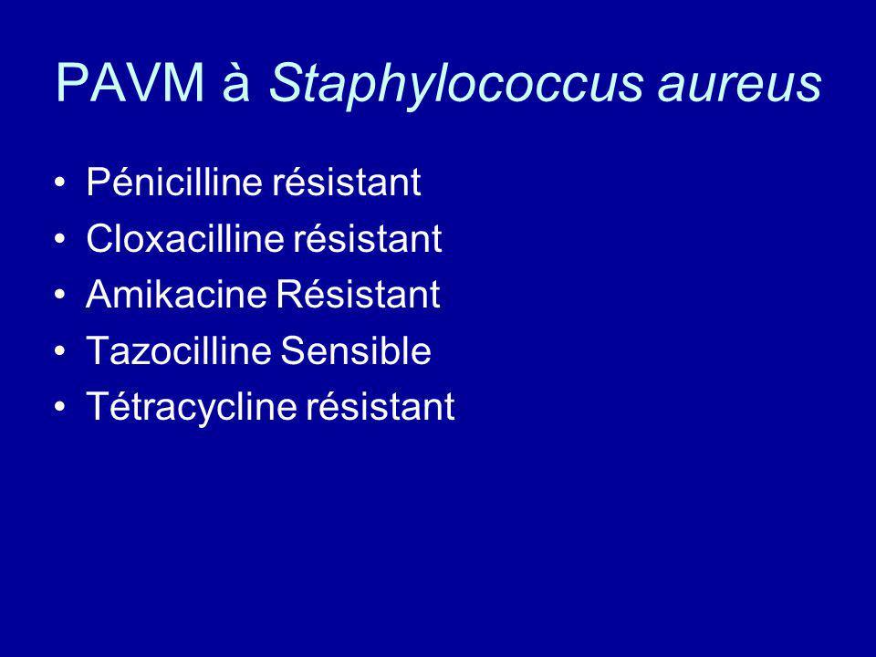 PAVM à Staphylococcus aureus Pénicilline résistant Cloxacilline résistant Amikacine Résistant Tazocilline Sensible Tétracycline résistant