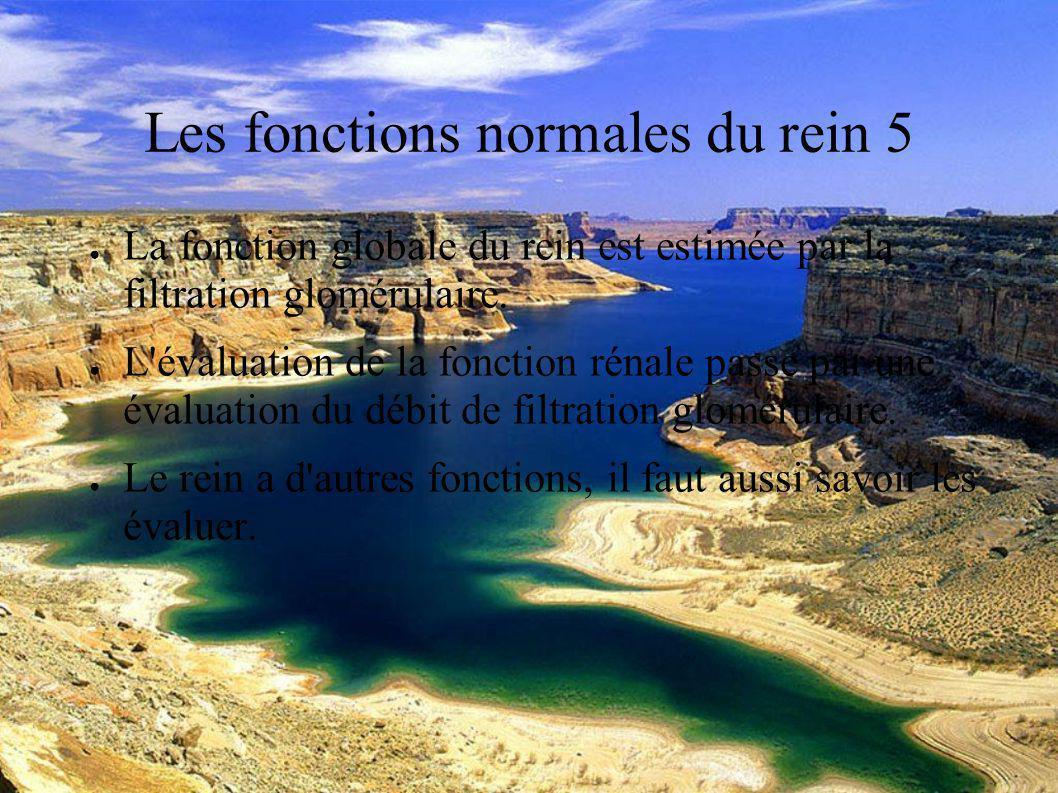 DESC Réanimation médicale Marseille 2004 Les fonctions normales du rein 5 La fonction globale du rein est estimée par la filtration glomérulaire.