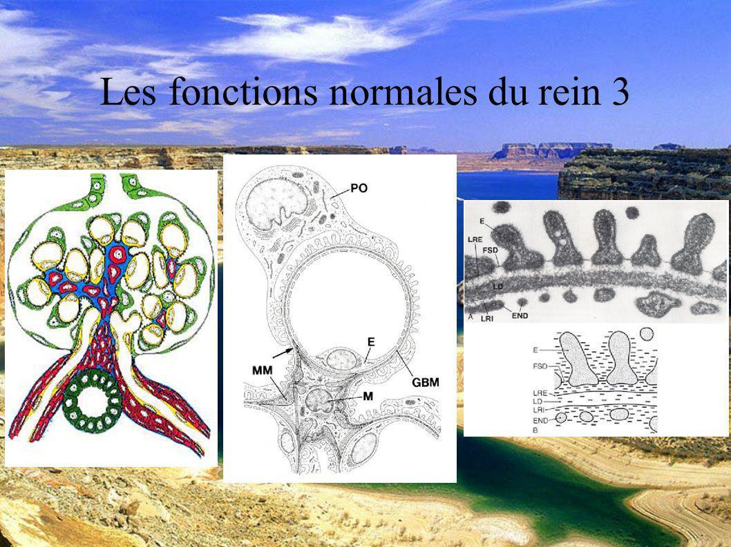 DESC Réanimation médicale Marseille 2004 Les fonctions normales du rein 4