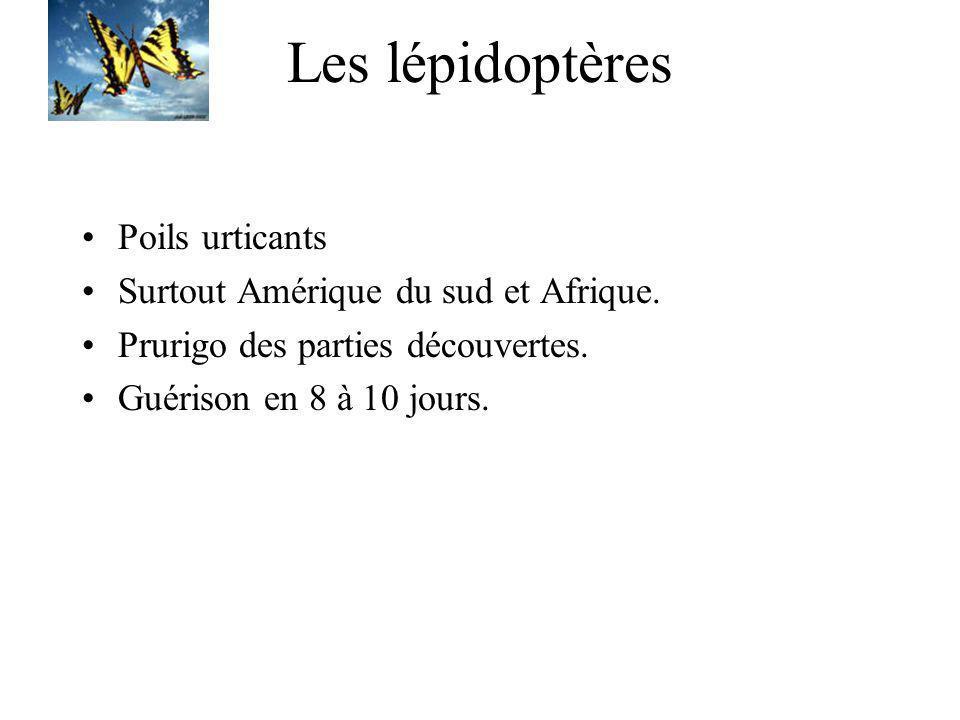 Les lépidoptères Poils urticants Surtout Amérique du sud et Afrique. Prurigo des parties découvertes. Guérison en 8 à 10 jours.