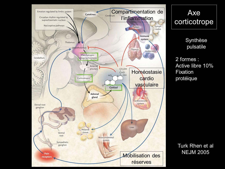 Axe corticotrope Turk Rhen et al NEJM 2005 Synthèse pulsatile 2 formes : Active libre 10% Fixation protéique Mobilisation des réserves Homéostasie car