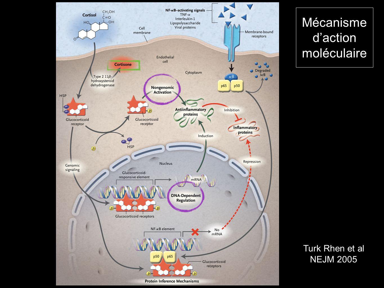 Mécanisme daction moléculaire Turk Rhen et al NEJM 2005