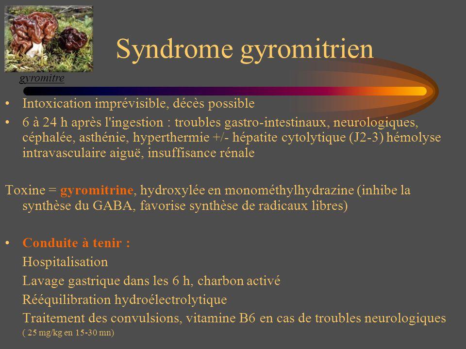 Syndrome gyromitrien Intoxication imprévisible, décès possible 6 à 24 h après l'ingestion : troubles gastro-intestinaux, neurologiques, céphalée, asth