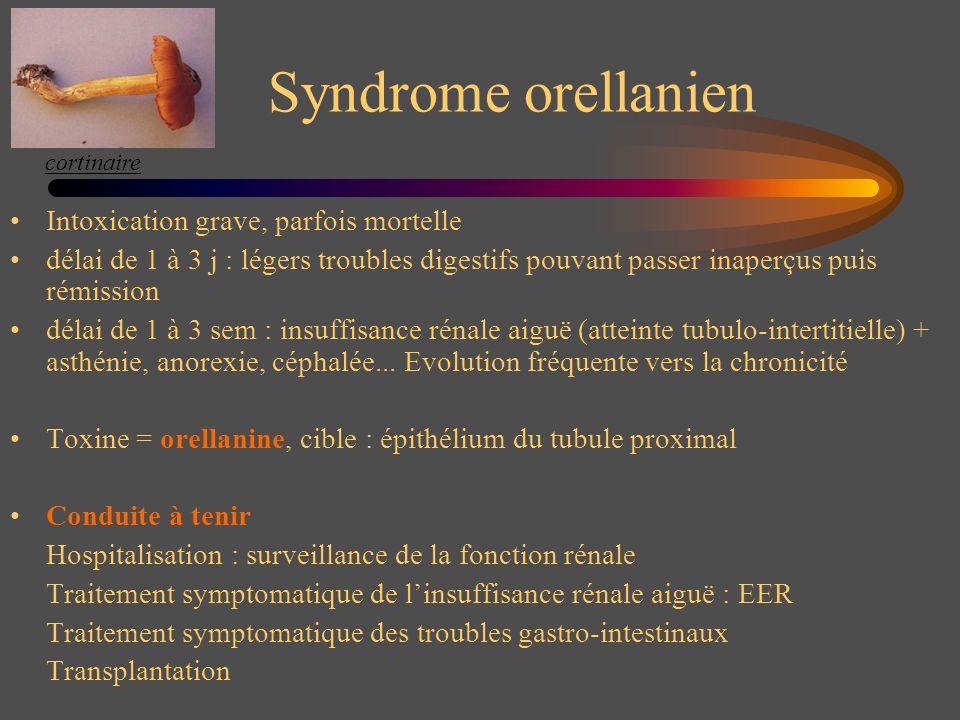 Syndrome orellanien Intoxication grave, parfois mortelle délai de 1 à 3 j : légers troubles digestifs pouvant passer inaperçus puis rémission délai de