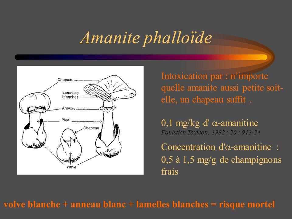 Amanite phalloïde Intoxication par : nimporte quelle amanite aussi petite soit- elle, un chapeau suffit. 0,1 mg/kg d' -amanitine Faulstich Toxicon; 19