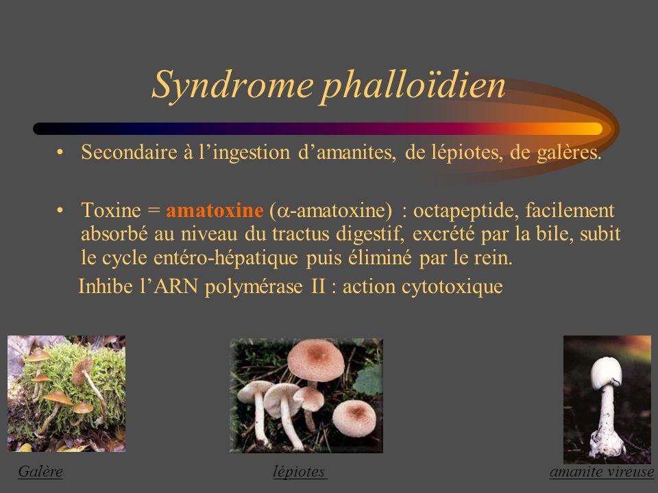 Syndrome phalloïdien Secondaire à lingestion damanites, de lépiotes, de galères. Toxine = amatoxine ( -amatoxine) : octapeptide, facilement absorbé au