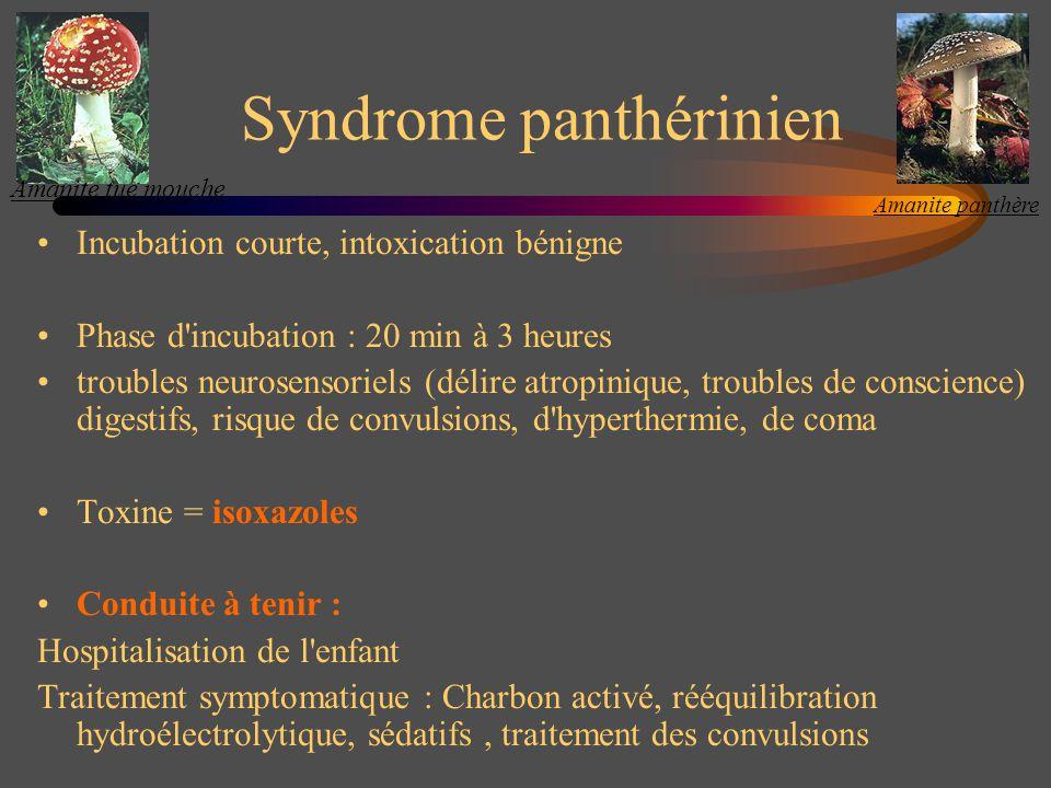 Syndrome coprinien Début brutal, 30 mn à 1h après l absorption d alcool : vasodilatation, céphalées, sueurs, tachycardie, hypotension, polypnée, collapsus, coma Toxine = coprine, son métabolite inhibe laldéhyde déshydrogénase Conduite à tenir Amélioration spontanée en 2 à 4 heures Hospitalisation selon la clinique (troubles du rythme, collapsus) Traitement symptomatique : remplissage, amines vasopressives, bloquant (Avlocardyl®) Coprin noir dencre