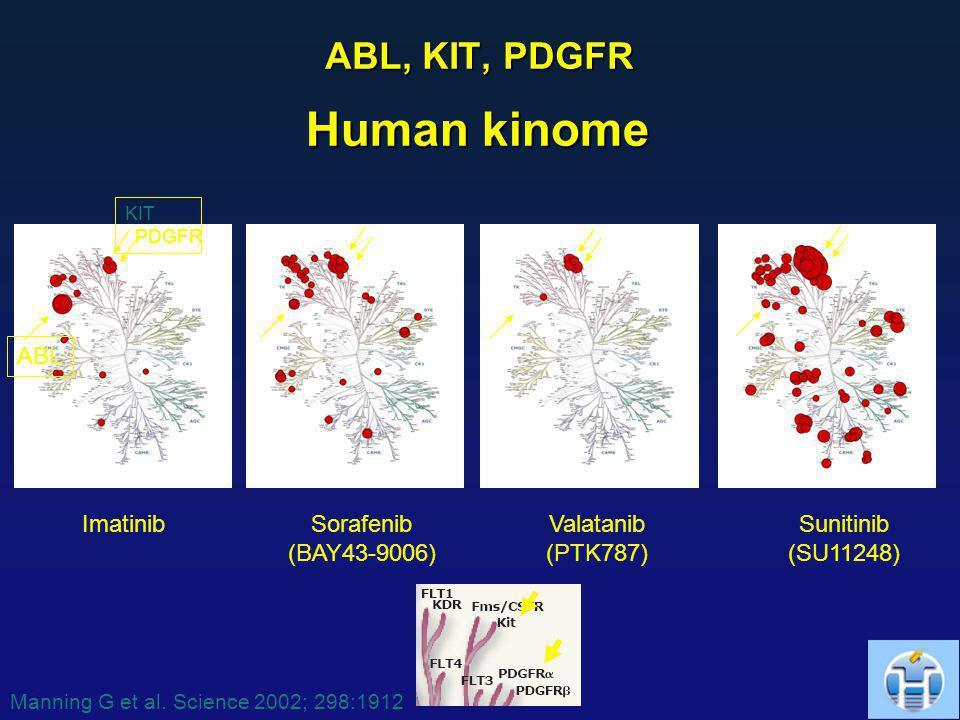 ABL, KIT, PDGFR Sorafenib (BAY43-9006) ImatinibSunitinib (SU11248) Valatanib (PTK787) KIT PDGFR ABL Human kinome Manning G et al. Science 2002; 298:19