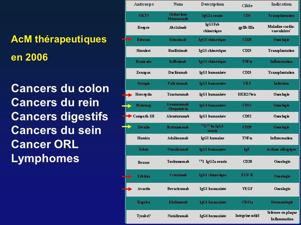 AcM thérapeutiques en 2006 Cancers du colon Cancers du rein Cancers digestifs Cancers du sein Cancer ORL Lymphomes