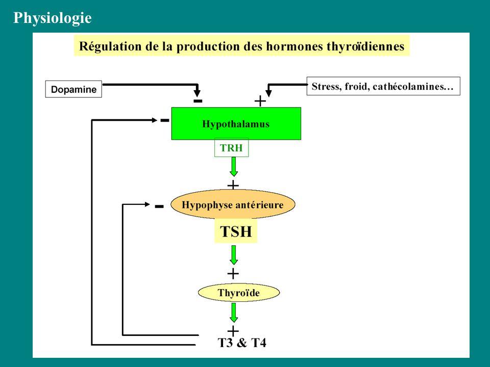 Effets des hormones thyroïdiennes Système touchéEffets normauxhypothyroïdie Thermogénèse/métabolisme basal Augmentent la production de chaleur/et le métabolisme Chute de T°c,intolérance au froid, gain pondéral Métabolisme lipidique,glucidique, protéique Favorisent catabolisme glucose,mobilisent les lipides hyperTG,chol, Baisse de la synthèse protéique(oedème) Système nerveuxEfficience normaleDépression,troubles mnésiques,résistance aux catécholamines Système cardiovasculaireInduction de récepteurs adrénergiques vasculaires Baisse de la fréquence et de la contractilité Système musculaireContractilité normaleHypotonie,crampes Système digestifMaintient du tonus et de la contractilité constipation Système tégumentaireFavorisent lhydratation et la sécrétion Peau pâle,sèche,oedème du visage Système respiratoireAugmentent la FRhypoventilation