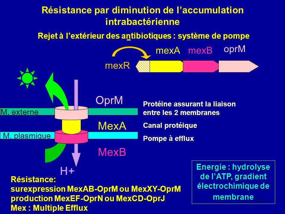 12 Résistance par diminution de laccumulation intrabactérienne Rejet à lextérieur des antibiotiques : système de pompe M. plasmique M. externe H+ OprM