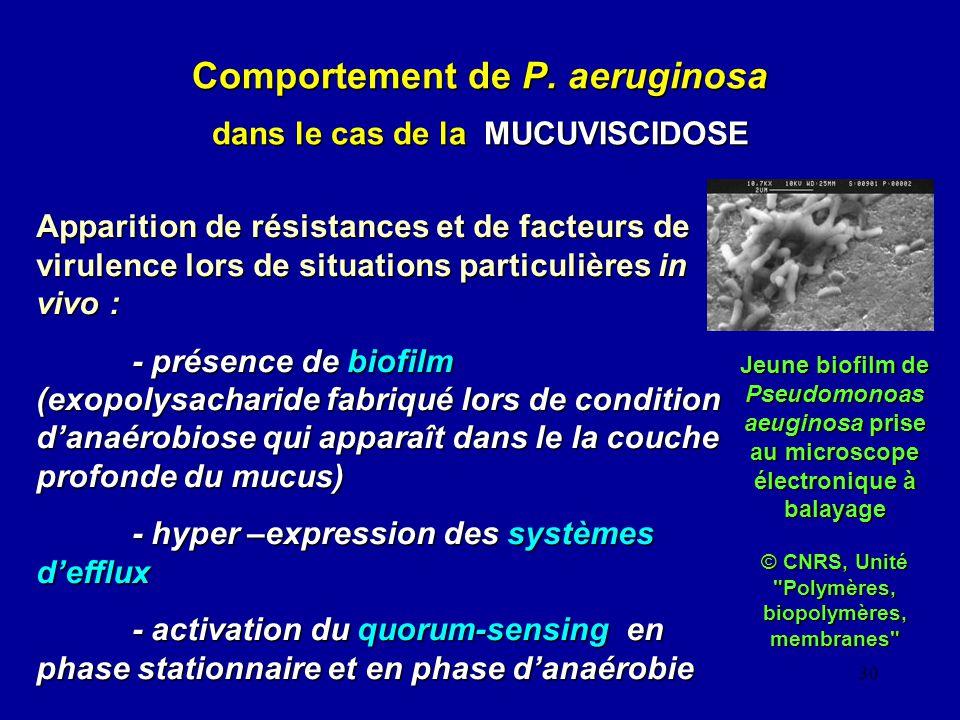 30 Comportement de P. aeruginosa dans le cas de la MUCUVISCIDOSE Apparition de résistances et de facteurs de virulence lors de situations particulière