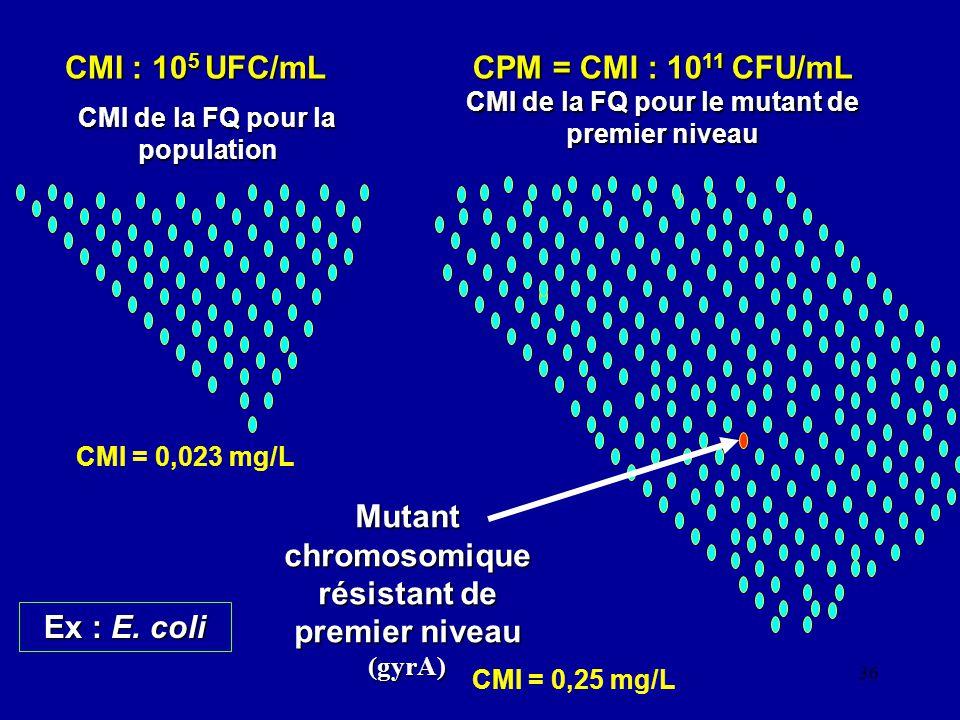 36 CMI : 10 5 UFC/mL CMI de la FQ pour la population CPM = CMI : 10 11 CFU/mL CMI de la FQ pour le mutant de premier niveau Mutant chromosomique résis