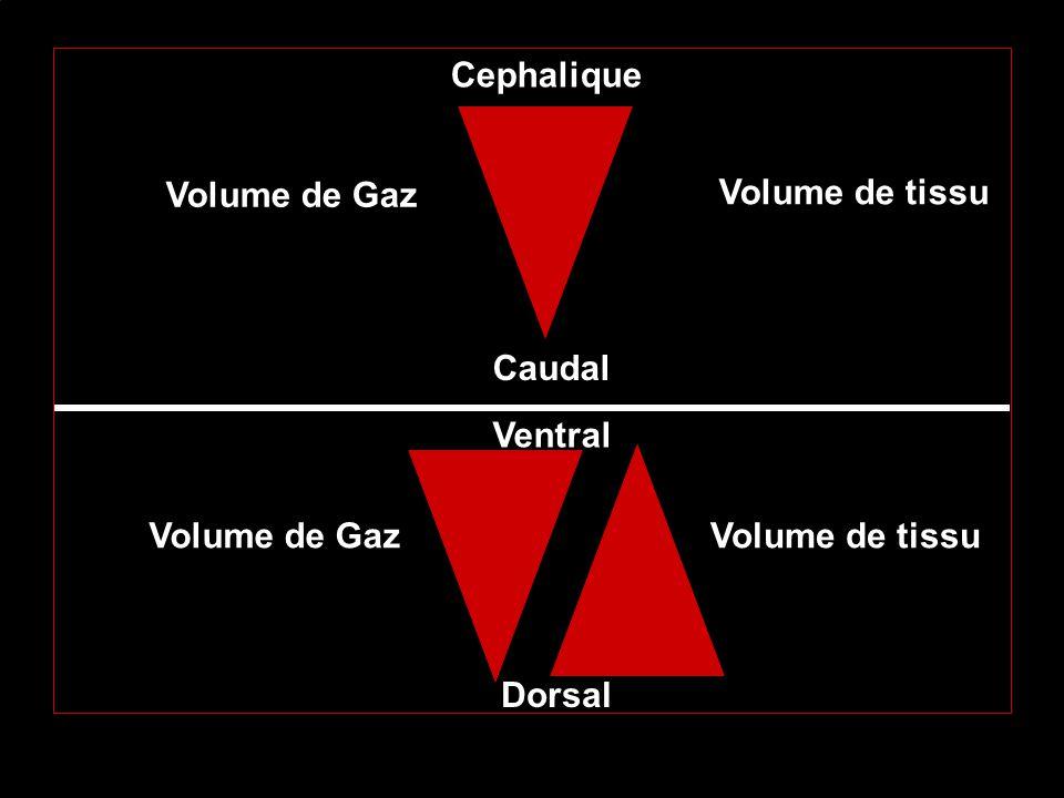 Volume de Gaz Volume de tissu Cephalique Caudal Ventral Dorsal Volume de GazVolume de tissu