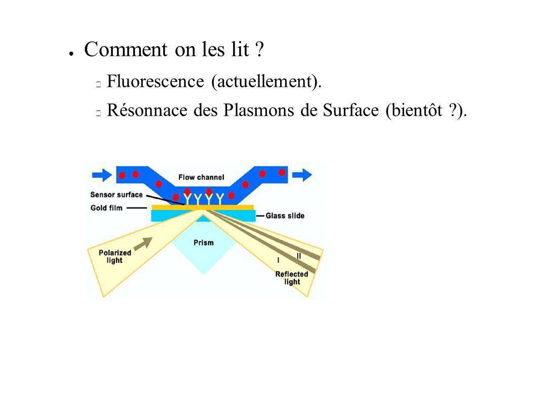Comment on les lit ? Fluorescence (actuellement). Résonnace des Plasmons de Surface (bientôt ?).