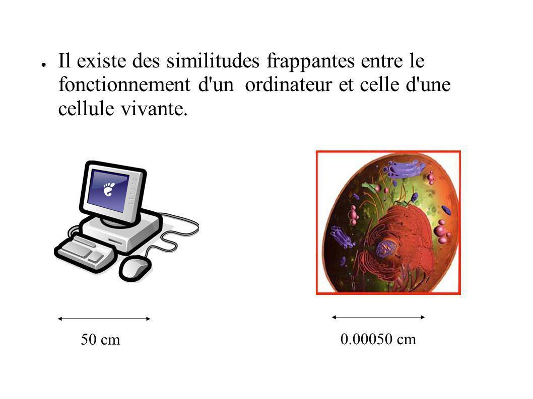 Il existe des similitudes frappantes entre le fonctionnement d'un ordinateur et celle d'une cellule vivante. 50 cm 0.00050 cm