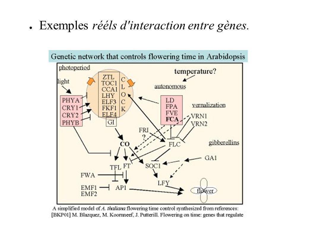 Exemples rééls d'interaction entre gènes.