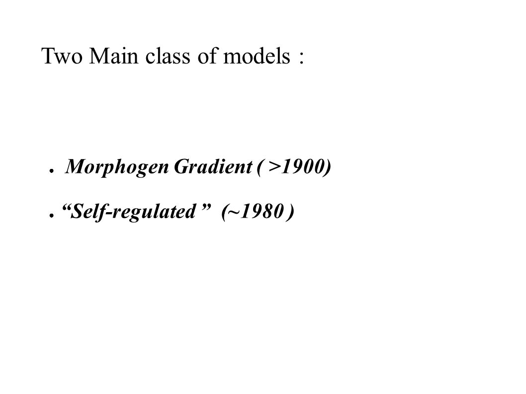 Morphogen Gradient ( >1900) Self-regulated (~1980 ) Two Main class of models :