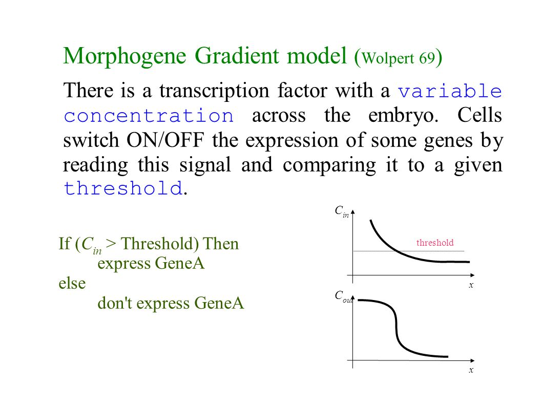 Morphogene Gradient model ( Wolpert 69 ) There is a transcription factor with a variable concentration across the embryo. Cells switch ON/OFF the expr
