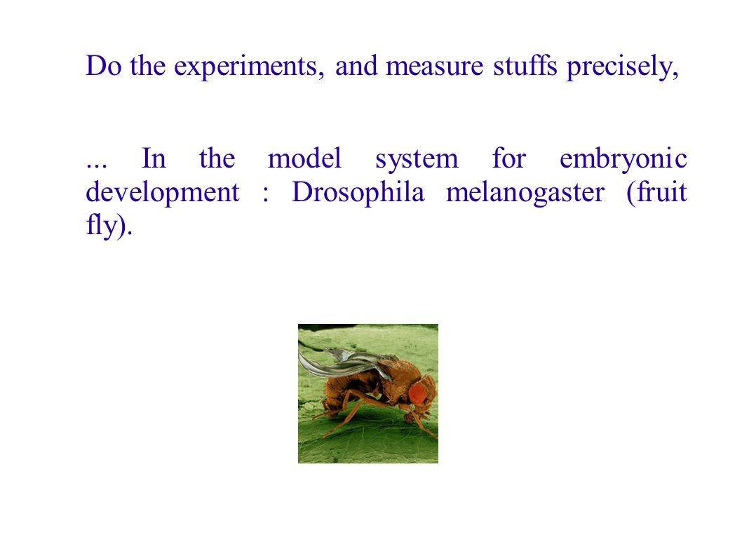 Do the experiments, and measure stuffs precisely,... In the model system for embryonic development : Drosophila melanogaster (fruit fly).