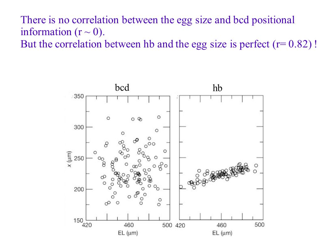 There is no correlation between the egg size and bcd positional information (r ~ 0). But the correlation between hb and the egg size is perfect (r= 0.