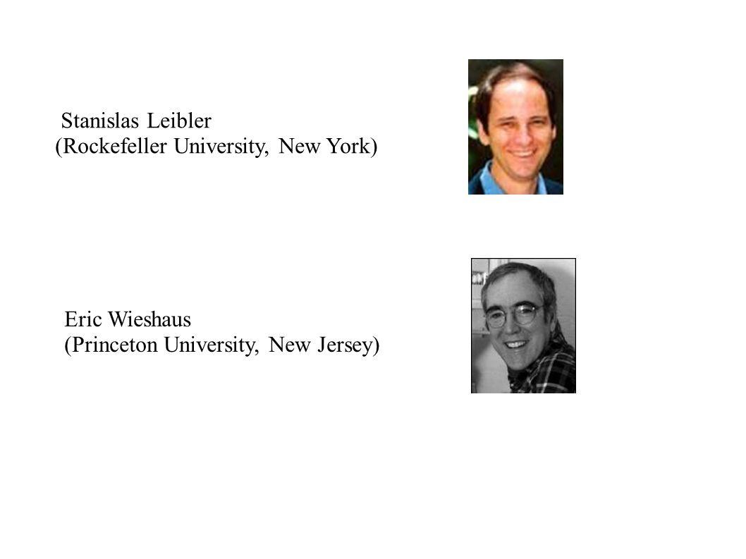 Stanislas Leibler (Rockefeller University, New York) Eric Wieshaus (Princeton University, New Jersey)