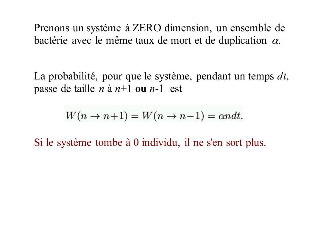 Prenons un système à ZERO dimension, un ensemble de bactérie avec le même taux de mort et de duplication.