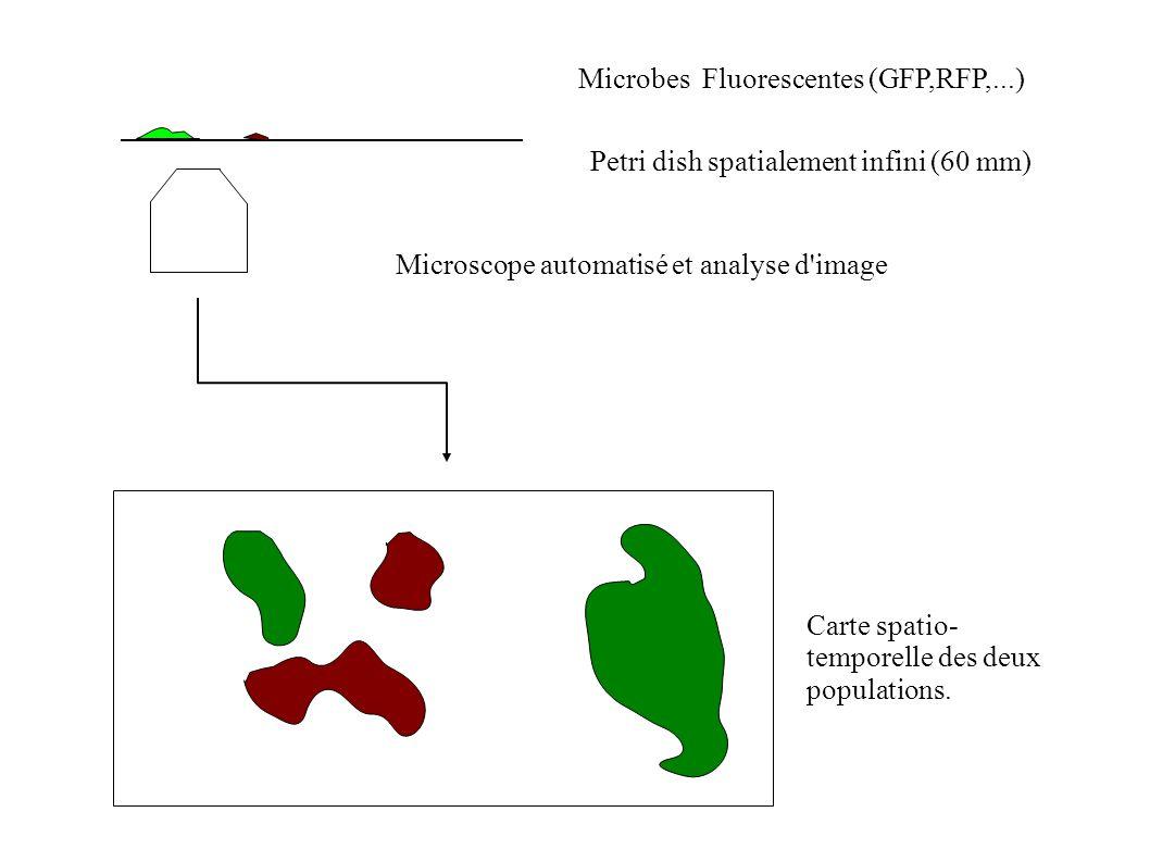 Microbes Fluorescentes (GFP,RFP,...) Petri dish spatialement infini (60 mm) Microscope automatisé et analyse d image Carte spatio- temporelle des deux populations.
