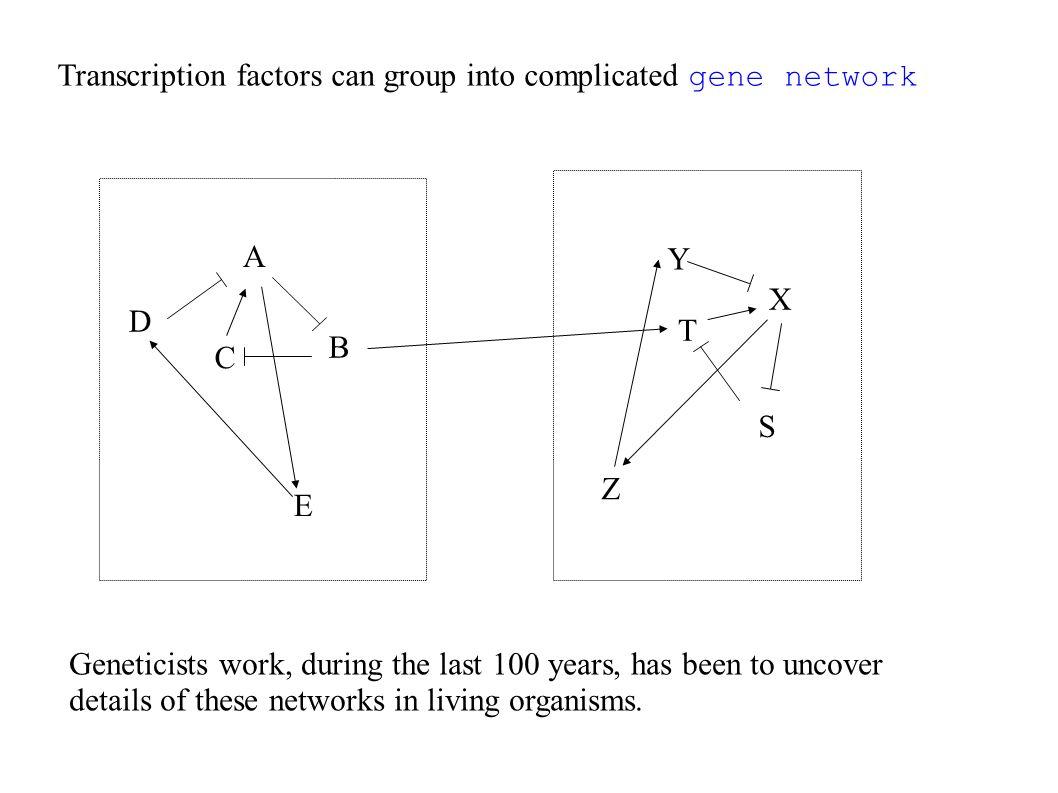 Construire un écosystème modèle : Spatialement étendu Temporellement long ( ~ 100 générations ) Où tout les paramètres sont mesurables Et qui permet de constituer des statistiques significatifs.