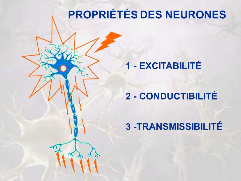 PROPRIÉTÉS DES NEURONES 2 - CONDUCTIBILITÉ 3 -TRANSMISSIBILITÉ 1 - EXCITABILITÉ