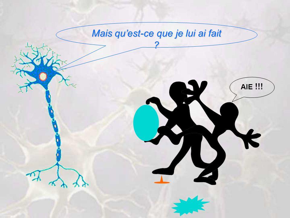 STIMULUS INFLUX NERVEUX RÉPONSE RÉFLEXE INTÉGRATION POTENTIEL DACTION NEURONE