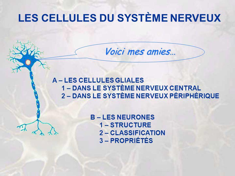 LES CELLULES DU SYSTÈME NERVEUX B – LES NEURONES 1 – STRUCTURE 2 – CLASSIFICATION 3 – PROPRIÉTÉS A – LES CELLULES GLIALES 1 – DANS LE SYSTÈME NERVEUX