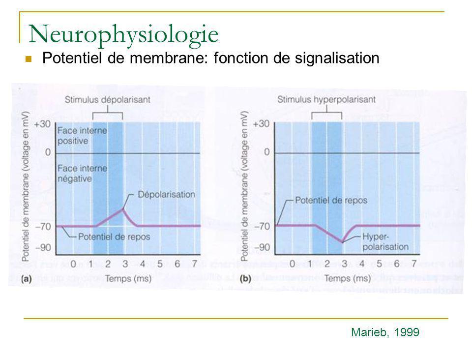 Neurophysiologie Potentiel de membrane: fonction de signalisation Marieb, 1999
