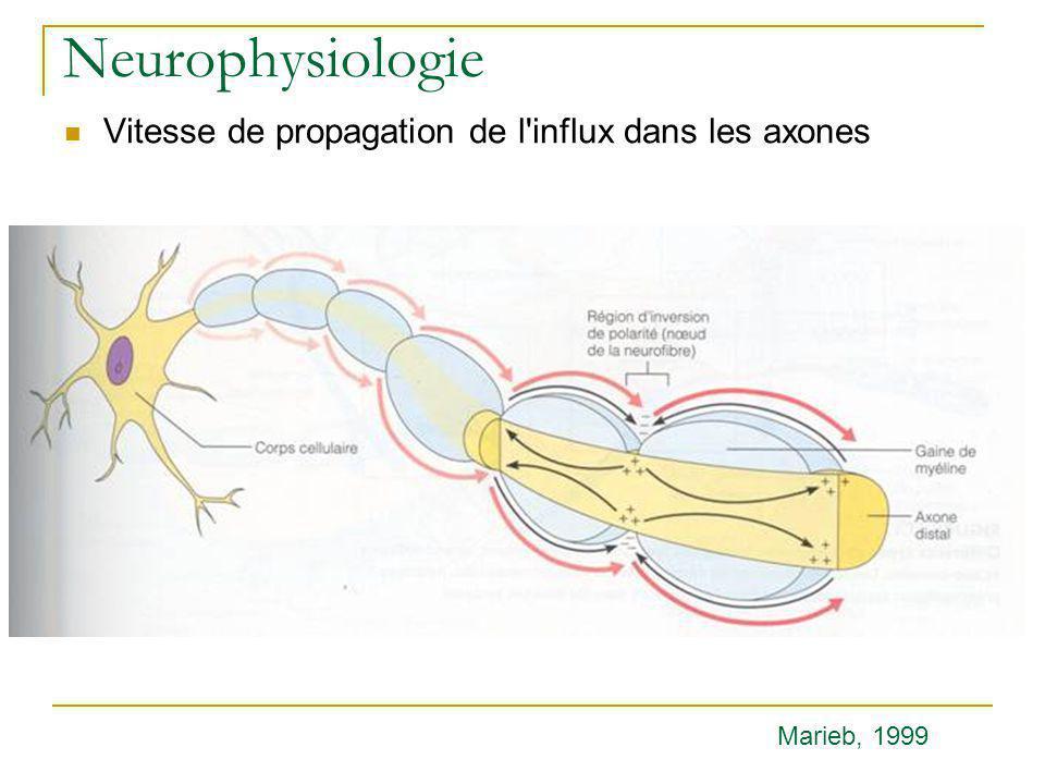 Neurophysiologie Vitesse de propagation de l'influx dans les axones Marieb, 1999