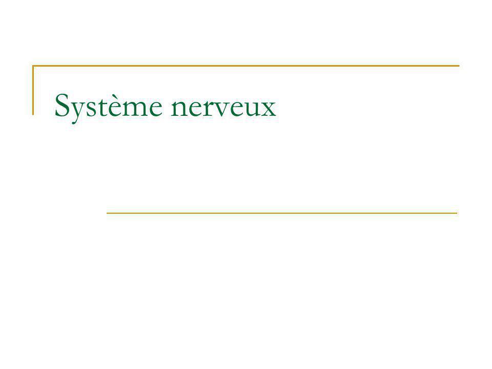 Neurophysiologie Intégration et modification des phénomènes synaptiques Marieb, 1999